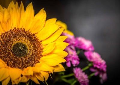 Sunflower Mark Johnstone Photography & Design