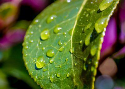 Leaf Mark Johnstone Photography & Design